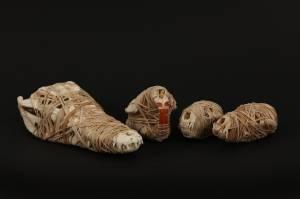 stupid animals, 2013_animal skull/elastic